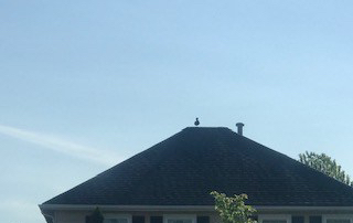 IMG_duck.roof1
